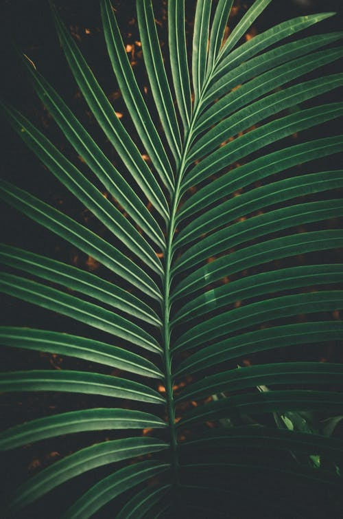 Textured backdrop of lush green tropical plant foliage with thin stem growing in summer