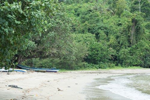 Free stock photo of beach, boat, greenery, ocean