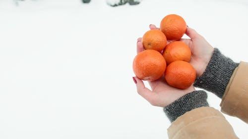 Foto stok gratis bahasa mandarin, Buah sitrus, buah tropis