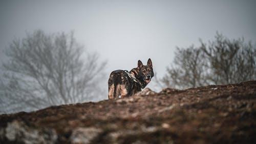Fotos de stock gratuitas de animal, bosque, bosque nuboso