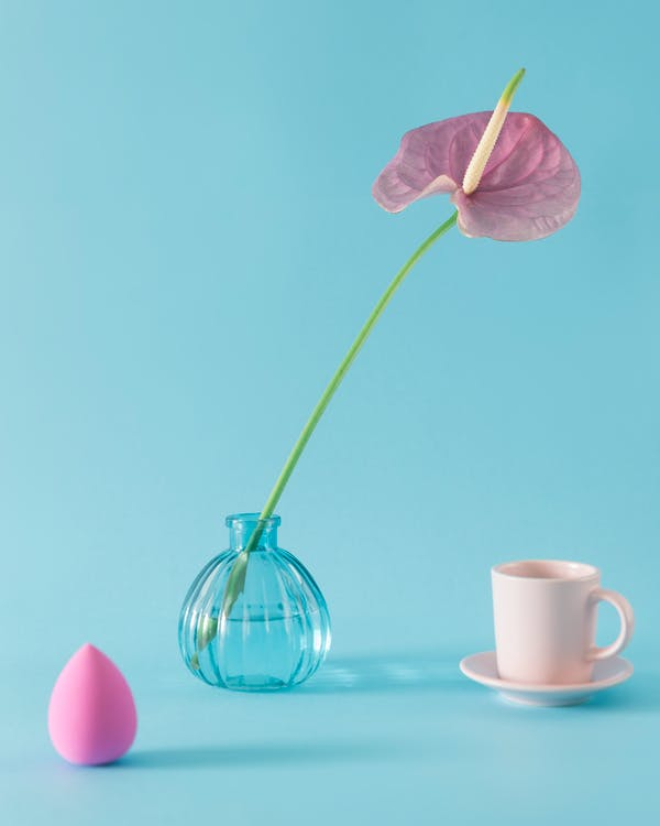 Composition of tender pink anthurium flower in vase placed on blue background near makeup sponge and white cup on saucer