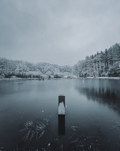 Calm river with frozen water placed among tall trees covered with snow placed in countryside in winter time under cloudy sky