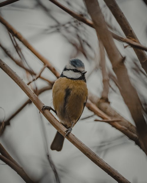 Small Eurasian blue tit sitting on branch of tree