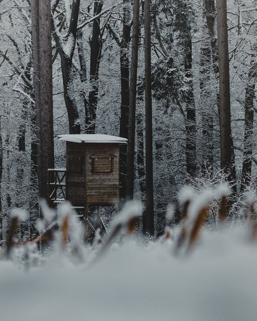 Small wooden house located among snowy trees in forest in countryside in winter time in daylight