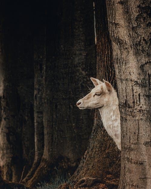 Free stock photo of animal, antler, art, cute