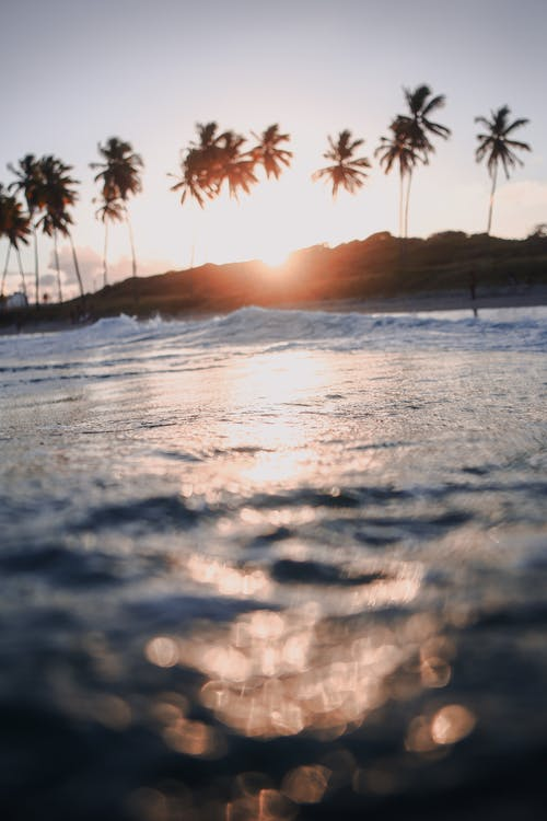 Silhouette of Coconut Palm Trees on Beach during Sunset