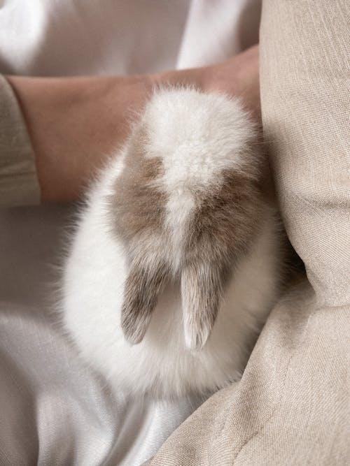 白と茶色の毛皮のテキスタイル