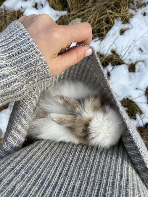白と茶色のウサギを保持している灰色のセーターの人