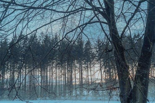 Kostenloses Stock Foto zu äste, bäume, dämmerung