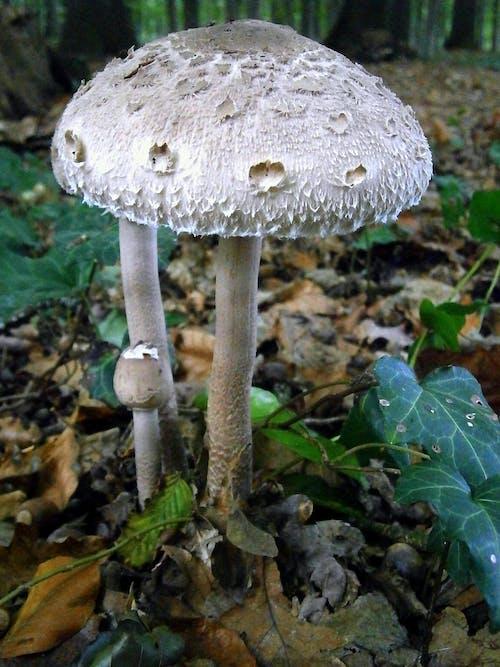 Darmowe zdjęcie z galerii z grzyb leśny, grzyby, las, szary