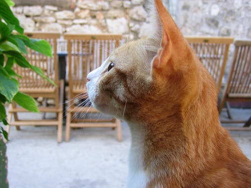 Side View of Orange Tabby Looking at Green Plant