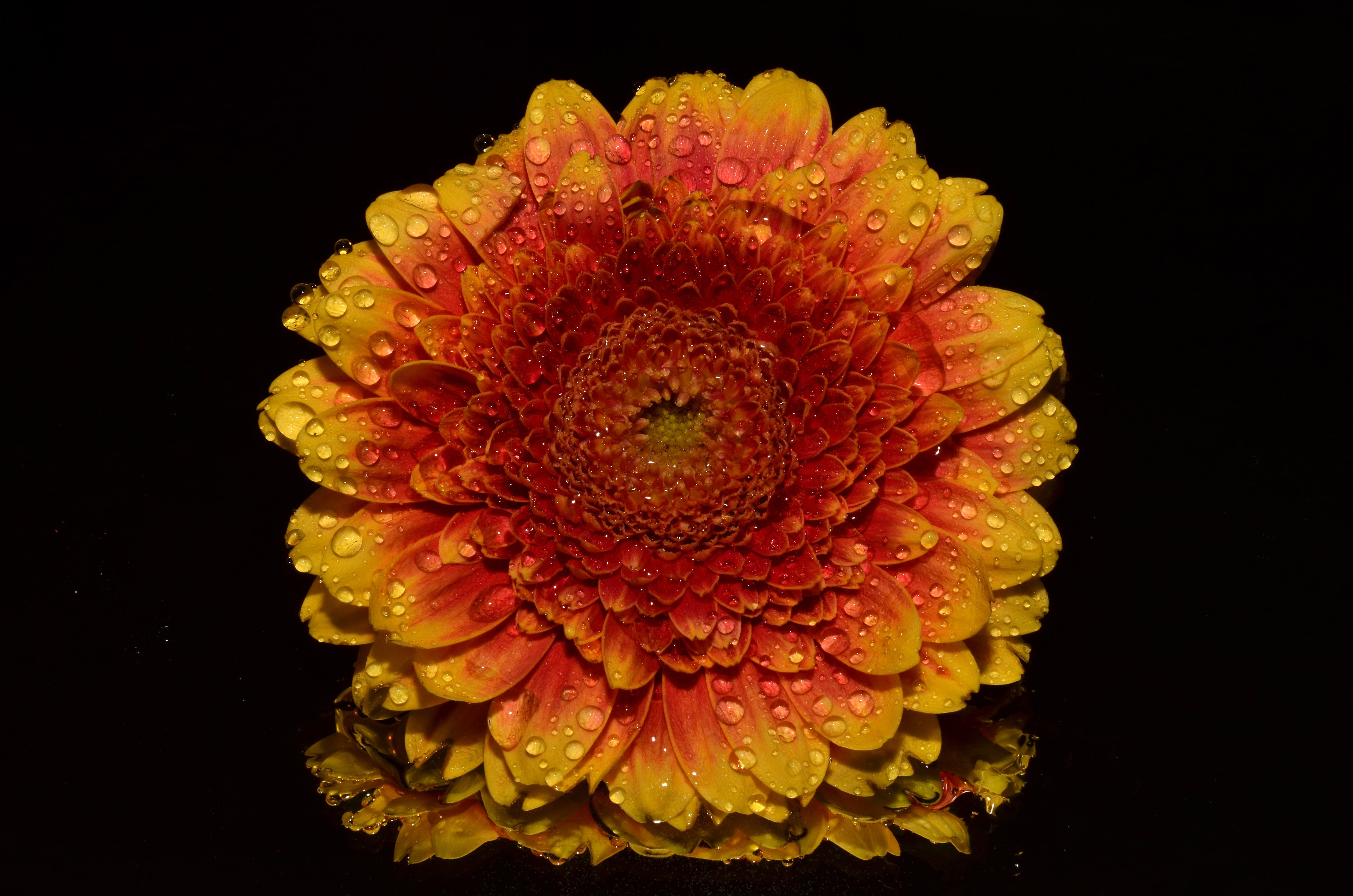 Sun Flower Portrait