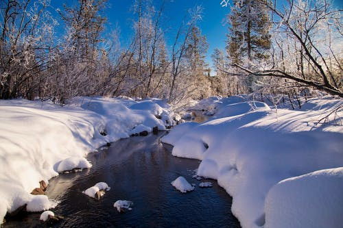 River Between Snow Covered Forest