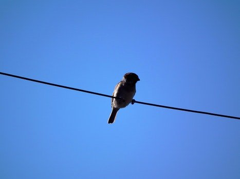 Free stock photo of sky, bird, blue, animal