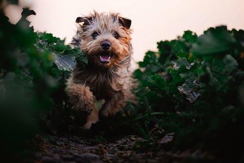 Dog Running Between Green Plants