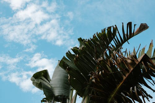 Fotos de stock gratuitas de al aire libre, árbol, cactus