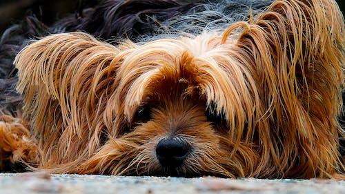 Close Up Photo Brown Long Coat Dog