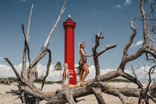 Foto profissional grátis de ao ar livre, areia, árvore