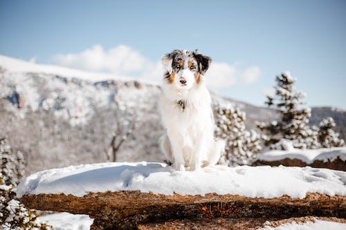 Fotos de stock gratuitas de adorable, al aire libre, amigo