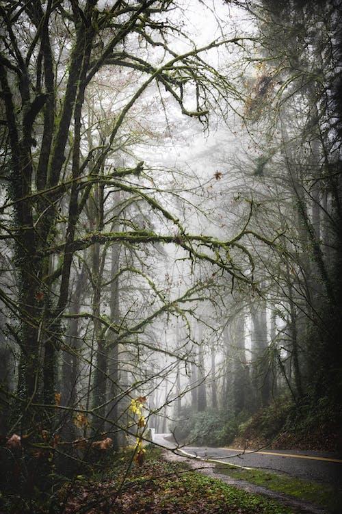 Narrow empty asphalt road going through misty forest with tall trees against foggy sky on autumn day
