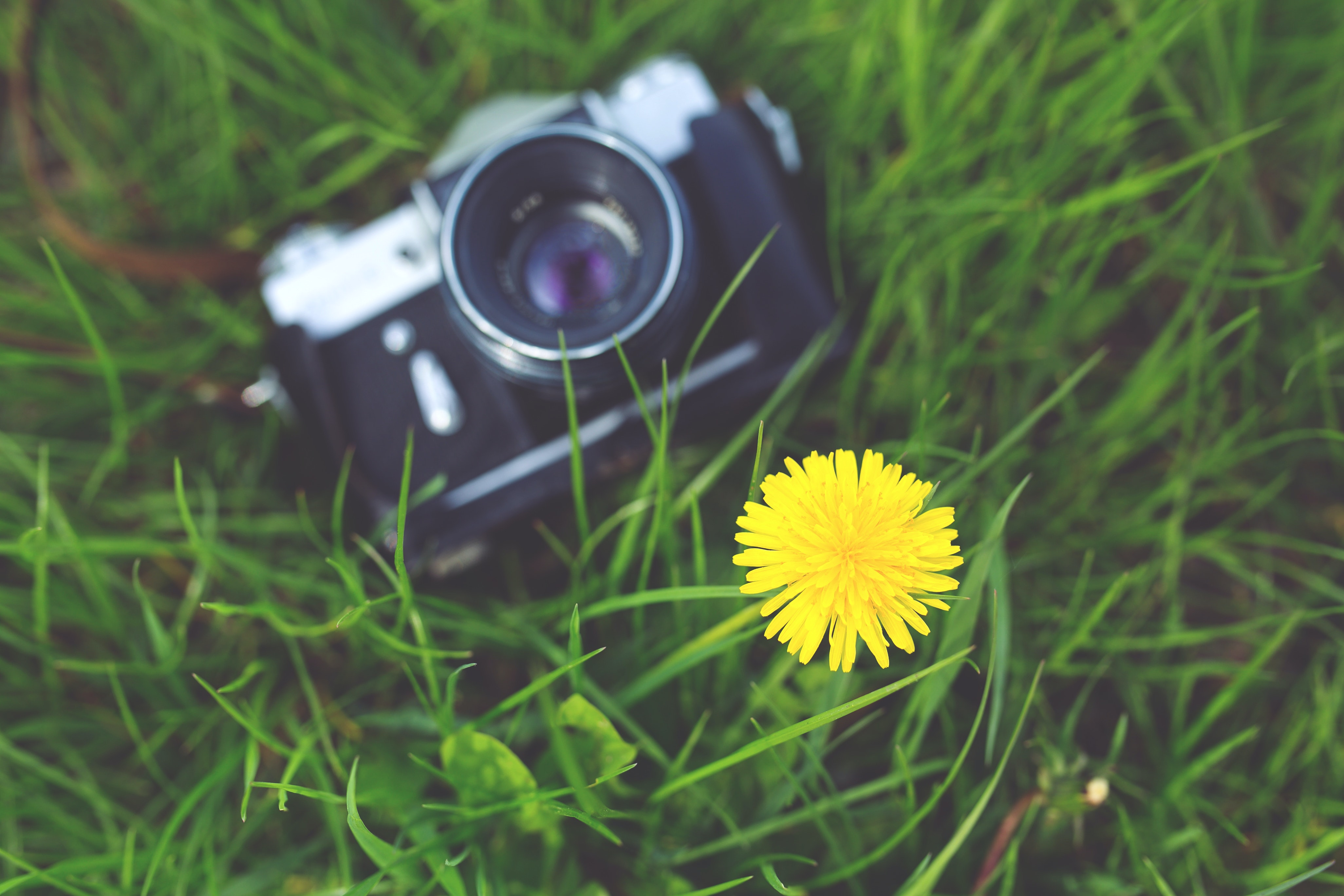 Little yellow flower and old camera free stock photo free download mightylinksfo