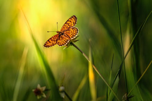 Selective Focus of an Orange Butterfly Perched on a Flower