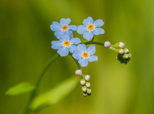 Gratis stockfoto met achtergrond wazig, bloeiend, bloemblaadjes