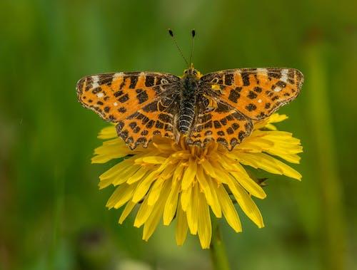 Foto profissional grátis de animal, ao ar livre, asas