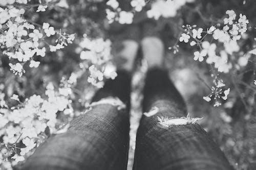 Fotobanka sbezplatnými fotkami na tému čiernobiely, dievča, džínsy, kvety