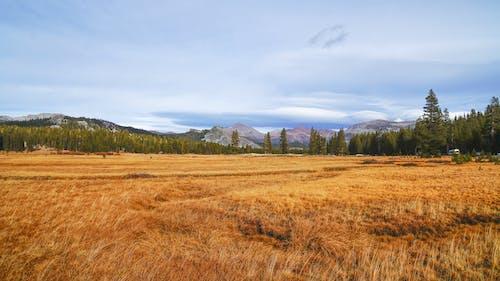 Free stock photo of autumn, autumn atmosphere, autumn color