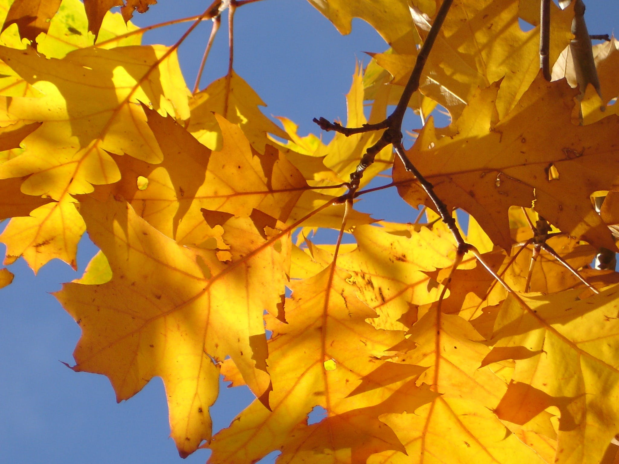 Photo of Yellow Leaves Under Sunny Day