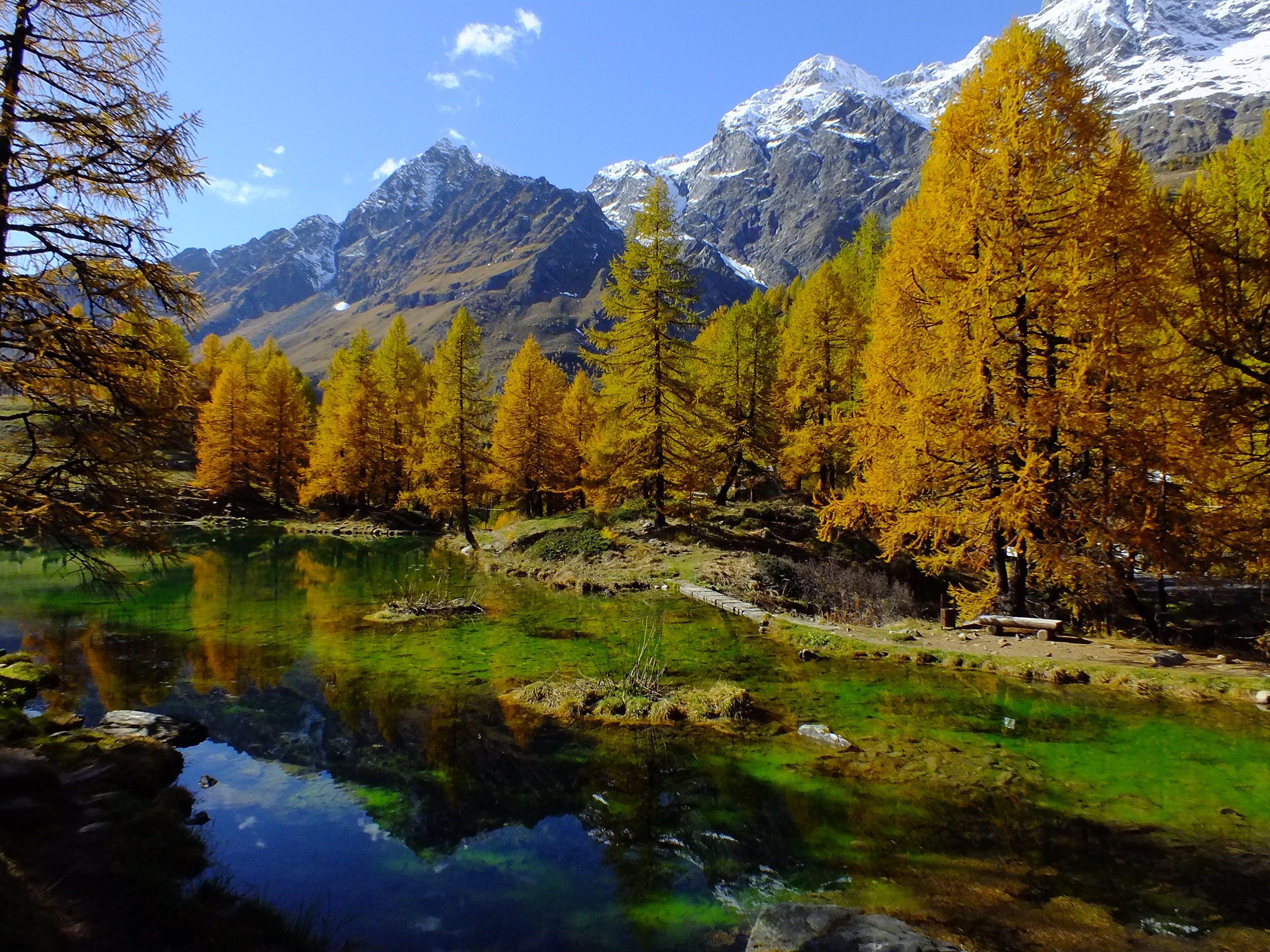 Trees Near the Mountains