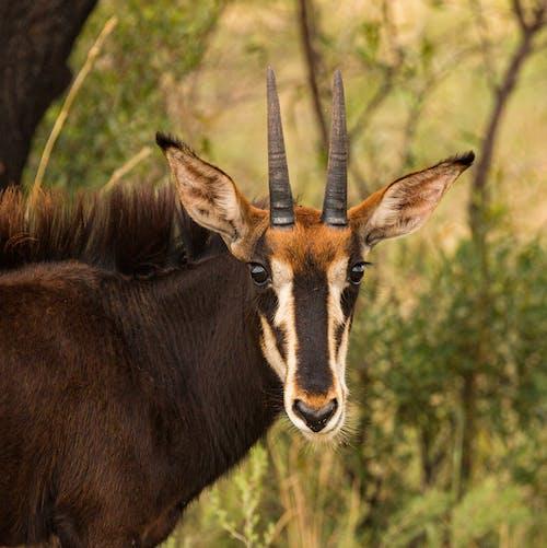 Photo of a Gazelle