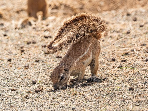 Brown Animal on Brown Soil