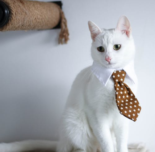 Free stock photo of adopt, animal, cat, pet