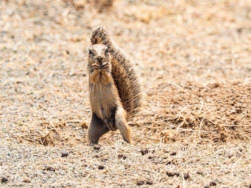 Squirrel on Brown Ground