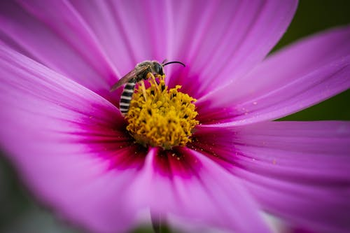 Honeybee Perched on Purple Flower in Close Up Photography