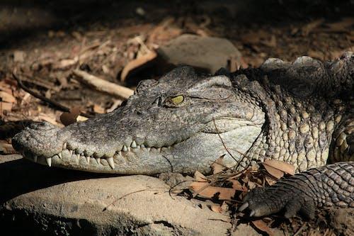 Photo of a Crocodile