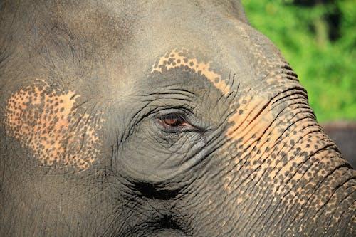 Close Up Photo of Gray Elephant