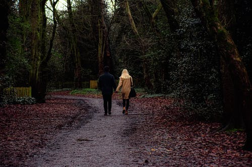 Free stock photo of autumn, love, love couple