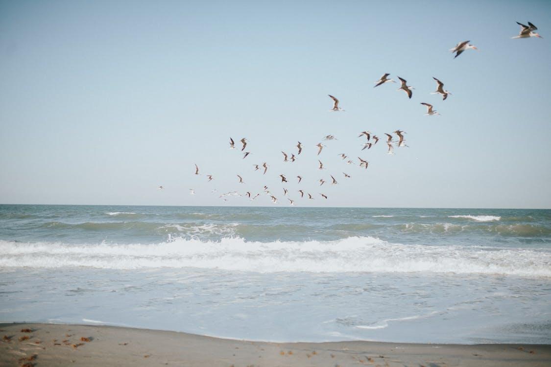 Birds flying on blue sky over waving sea