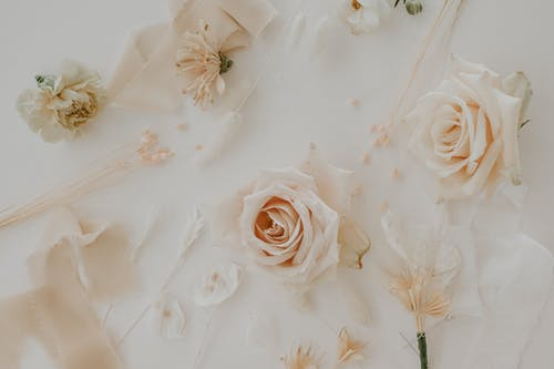 Delicate buds of roses attached to white wall with thin twigs and ribbon