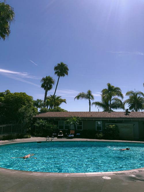 Swimming Pool Surrounded by Palm Trees
