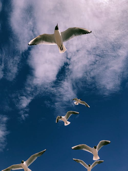 White Birds Flying Under Blue Sky