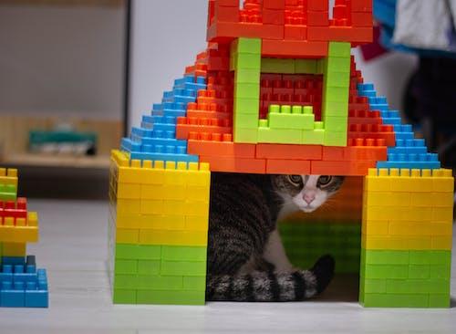 Free stock photo of animal, animal lover, brick, colorful
