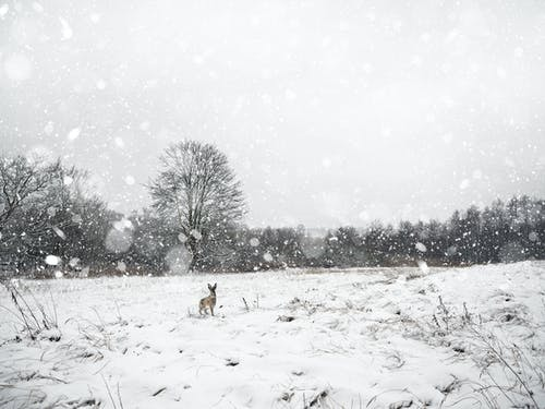 Brown Dog on Snow Covered Ground