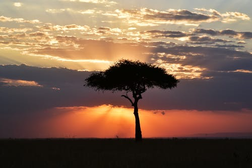 Tree on Grass Field during Sunset