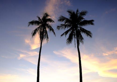 低角度攝影, 夏天, 夏季 的 免費圖庫相片