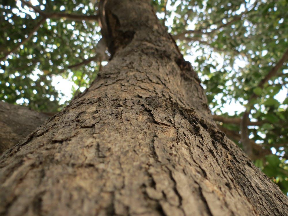 arbre, arrière-plan, bois