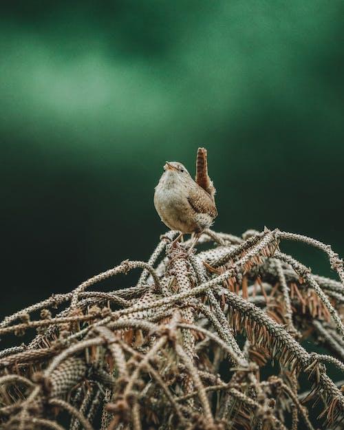 겨울, 깃털, 나무의 무료 스톡 사진